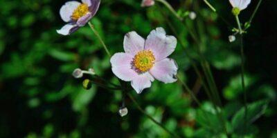 Na 4 ha znajduje się ok. 6 tysięcy gatunków iodmian roślin pochodzących zróżnych stref klimatycznych. Odległość: 4 km